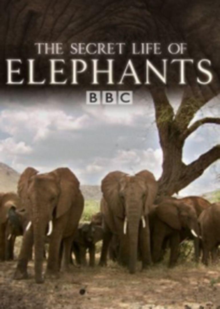 大象的神秘生活